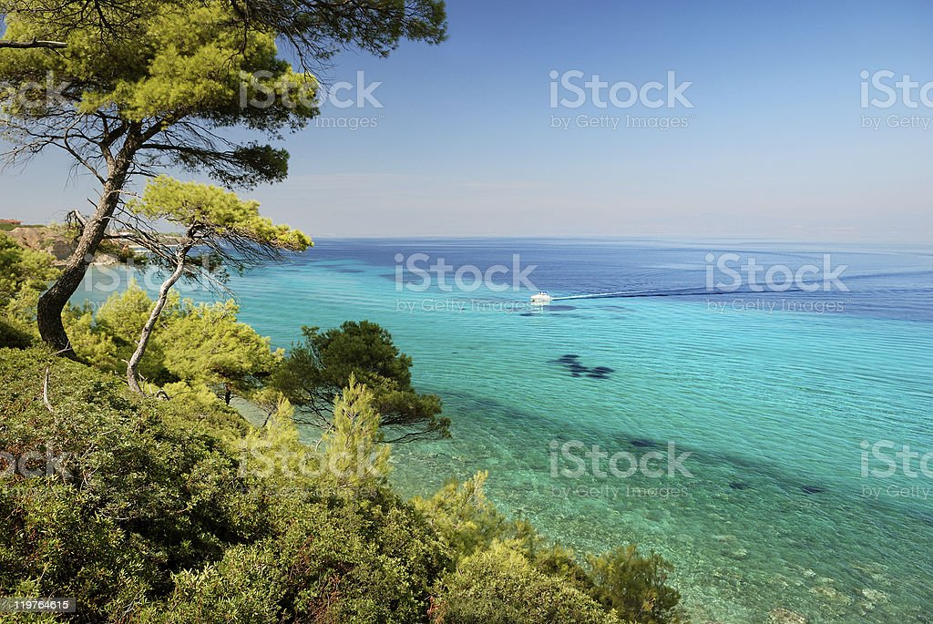 pine forest over sea stock photo