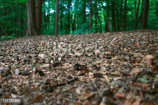 Pine forest soil.