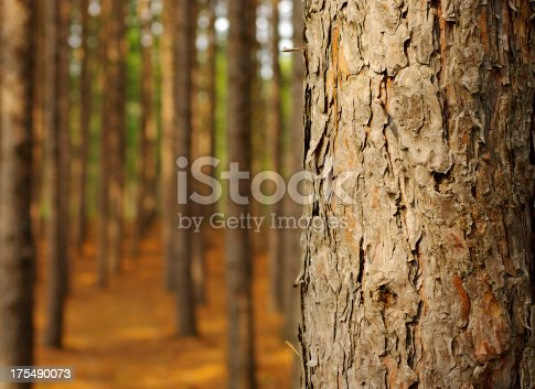 View of a forest.  Tree trunk in the foreground.