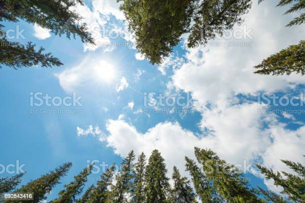 Photo of Pine Forest