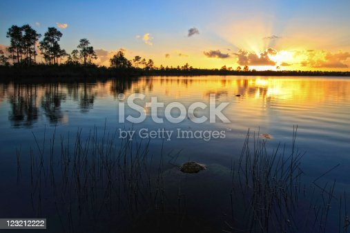 A beautiful sunset at Pine Glades Lake in Everglades National Park, Florida. An alligator appears in the mid-ground.