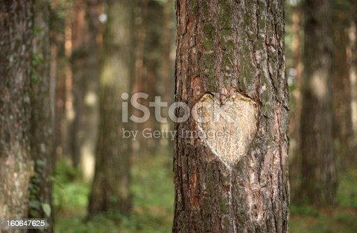 Heart Shape Carved on a Tree