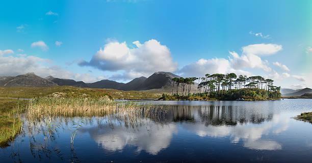 Pine Island, Connemara National Park, Ireland stock photo