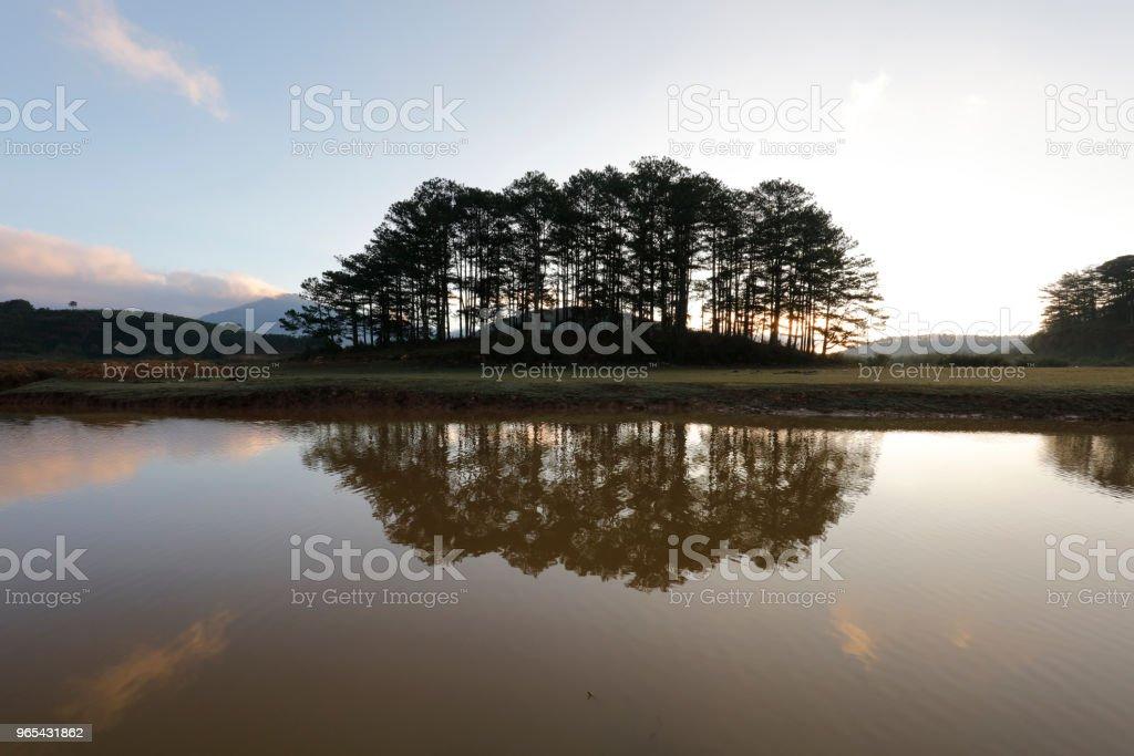 Île des pins au soleil - Photo de Arbre libre de droits