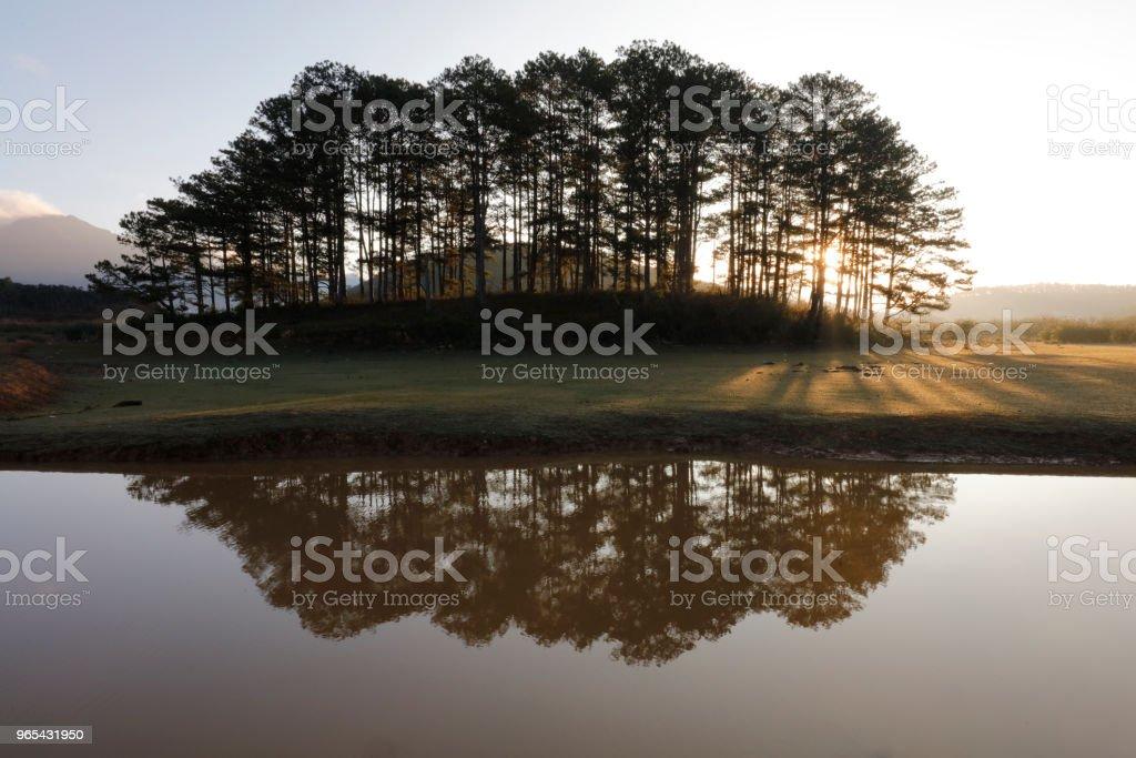 陽光下的松樹島 - 免版稅反射圖庫照片