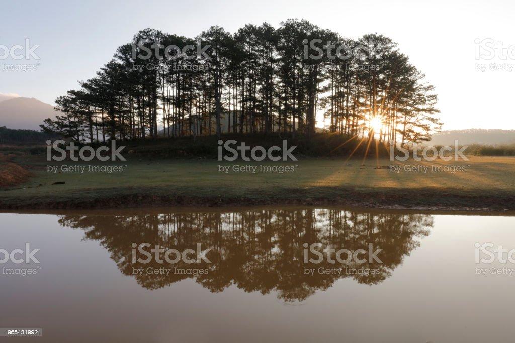 Pine island in sunlight zbiór zdjęć royalty-free
