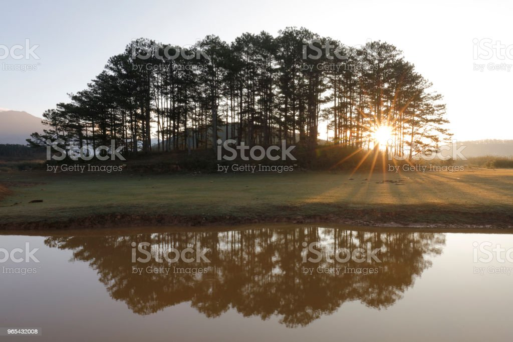 Pine island in sunlight royalty-free stock photo