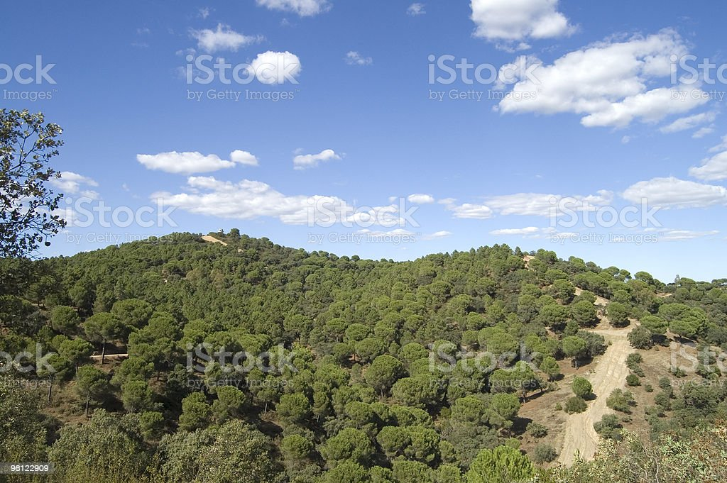 pine landscape royalty-free stock photo