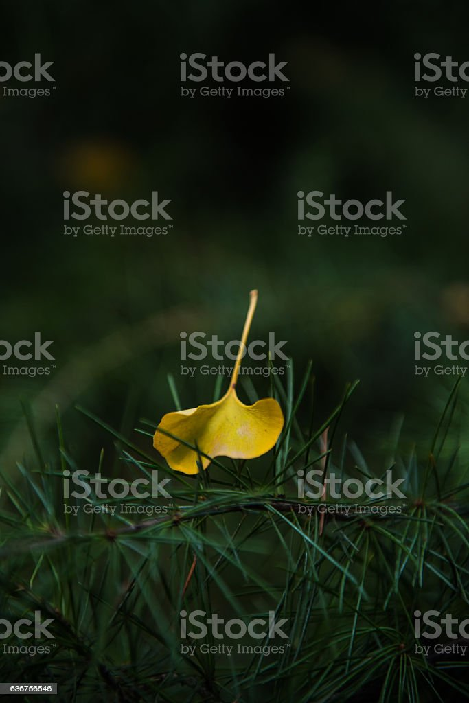 Pine needles and leaves. stock photo