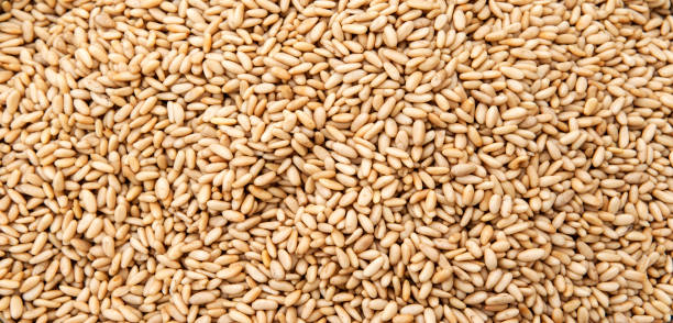 Pine nuts banner Pine nuts for sale in farmers market aisne stock pictures, royalty-free photos & images