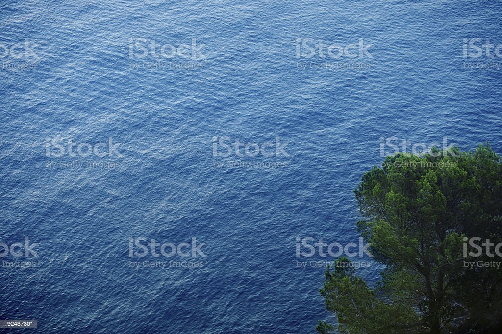 Pine & ocean royalty-free stock photo