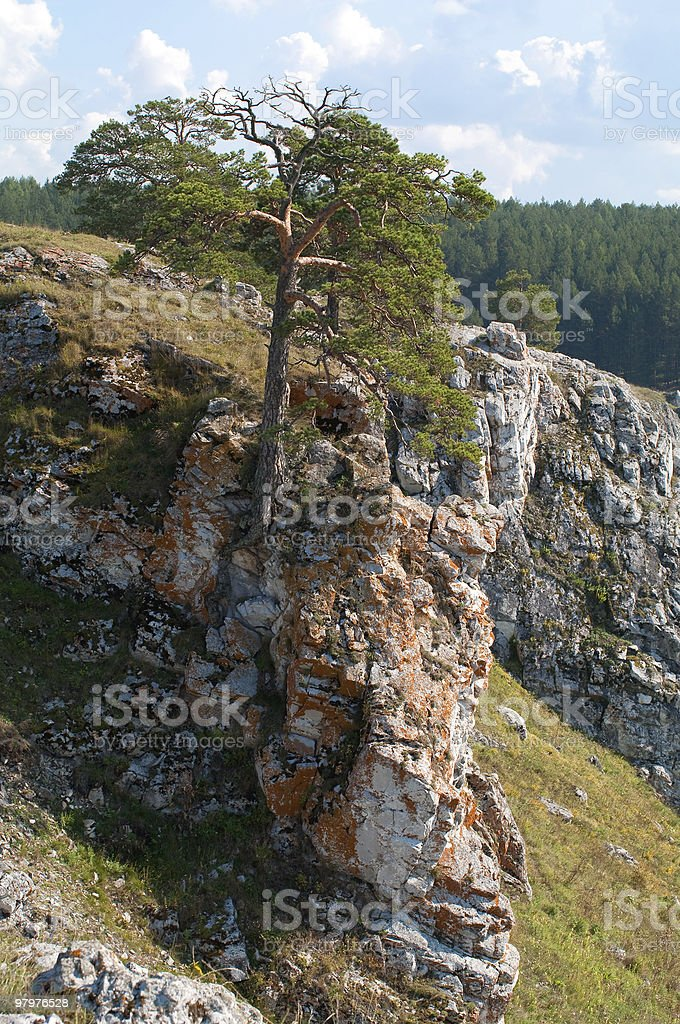Pine on a rock royalty-free stock photo