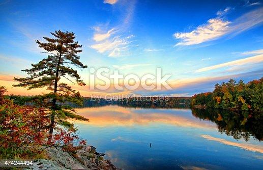 istock Pine On Rock 474244494