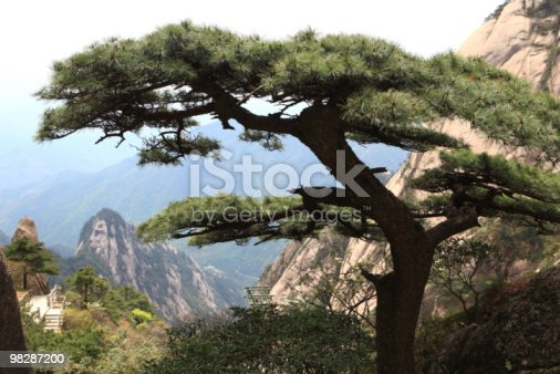 Pine On The Huangshan Mountains Stock Photo & More Pictures of Anhui Province