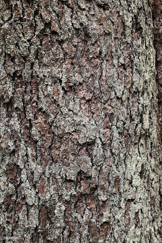 pine royaltyfri bildbanksbilder