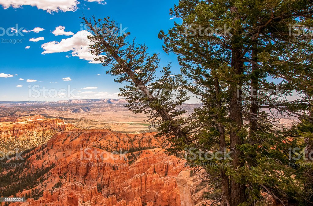 Pine slopes in the national park Bryce Canyon, Utah, USA stock photo