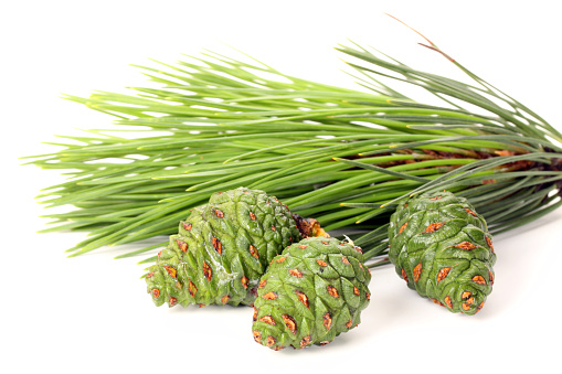 Pine sprig with bud on the white background
