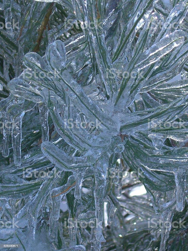 Pine Swirl stock photo