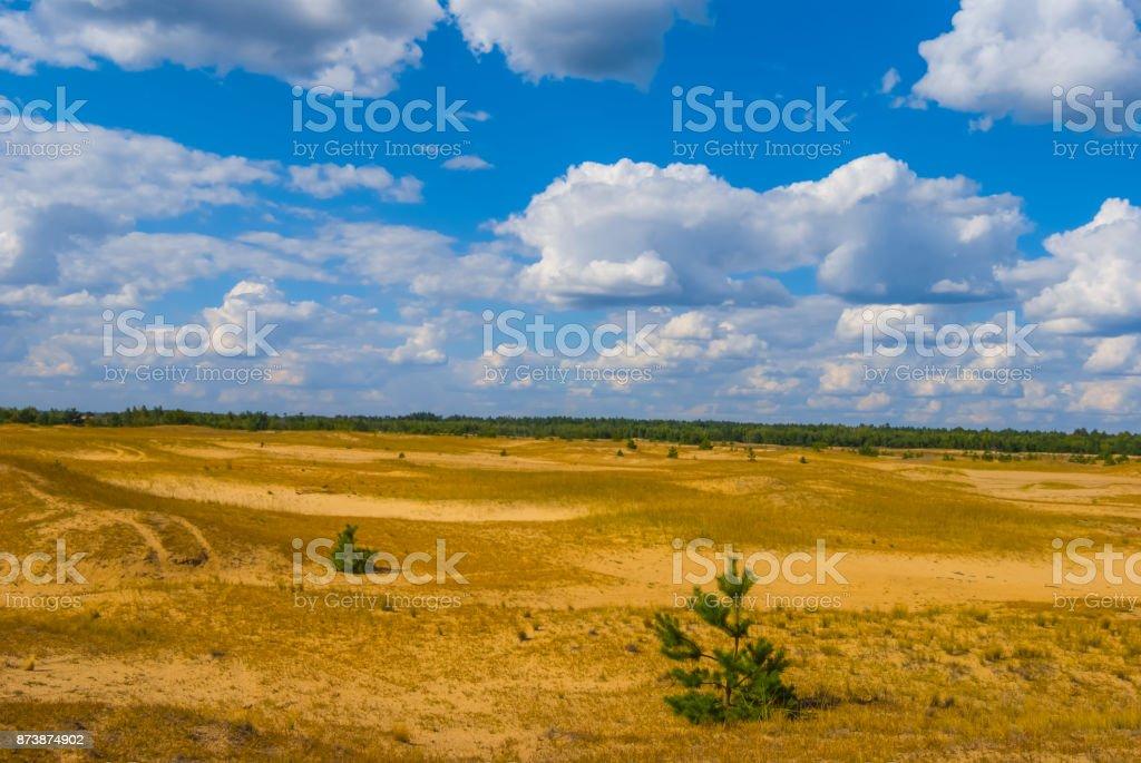 pine tree among a sand desert stock photo