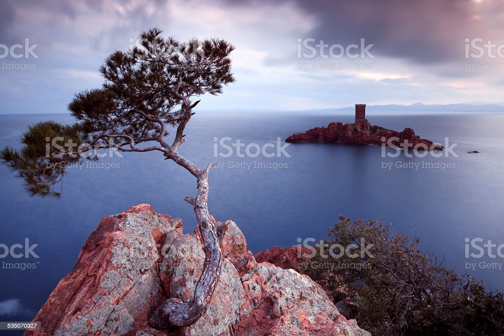 Pine tree and castle island stock photo