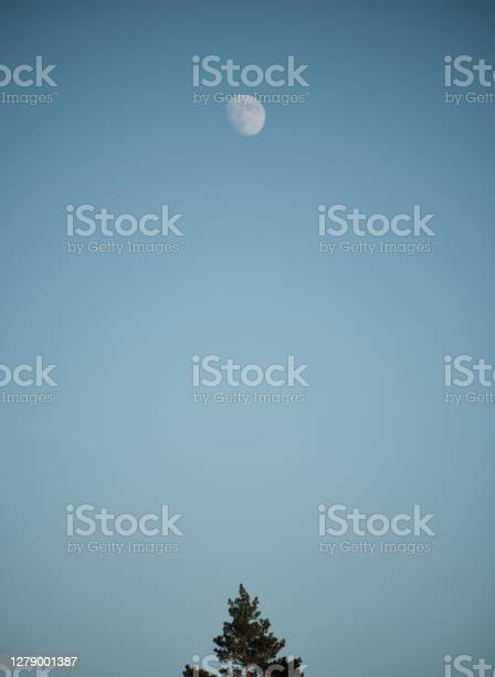 Photo of A pine tree at the bottom of the picture and the moon at the top of the picture with a blue background