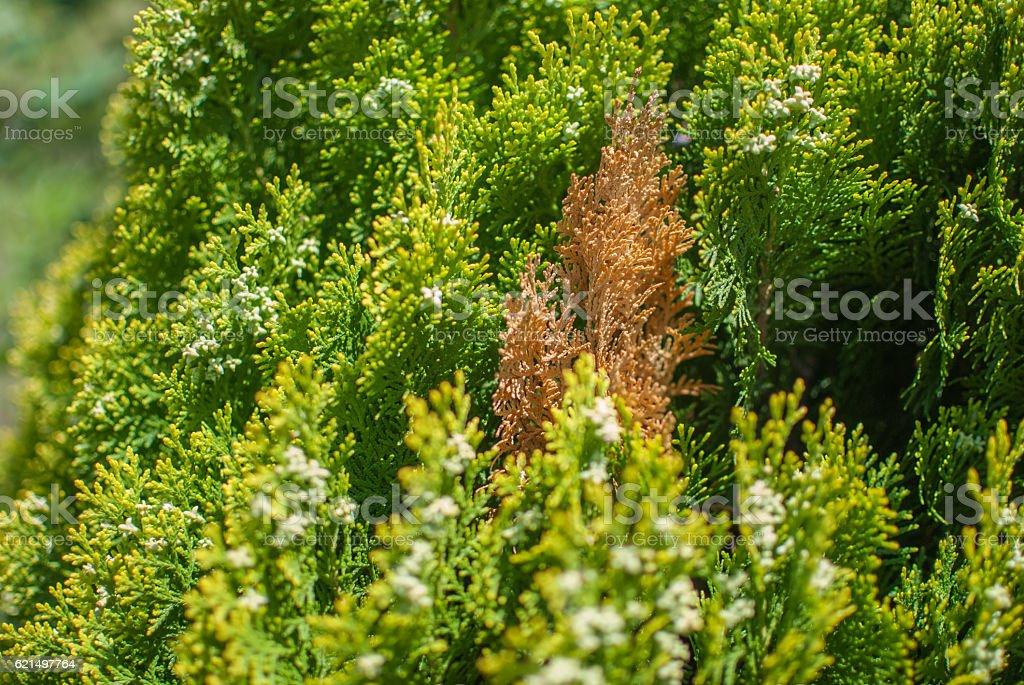 Pine tree autumn leaves background Lizenzfreies stock-foto
