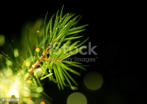 875265254 istock photo Pine Tree Background For Christmas Decoration 618423108