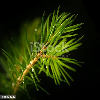 875265254 istock photo Pine Tree Background For Christmas Decoration 618423230
