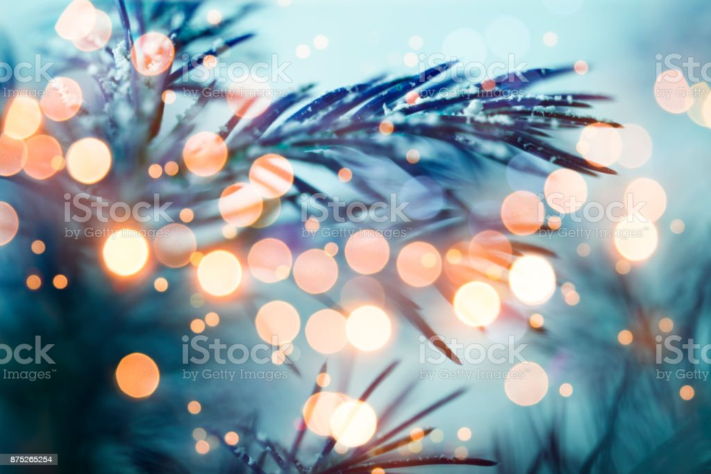 Pine tree background for Christmas Decoration stock photo