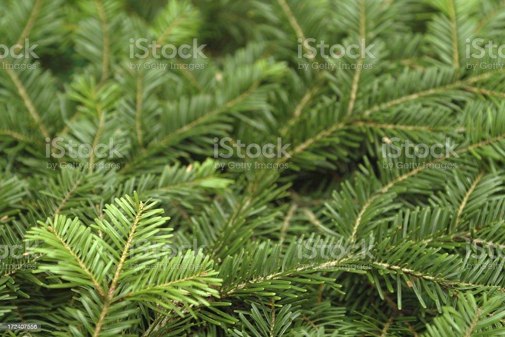 Pine Tree Background royalty-free stock photo