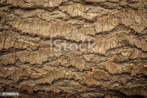 Pine tree bark on a cut down tree in a forest. Suitable as nature background image.