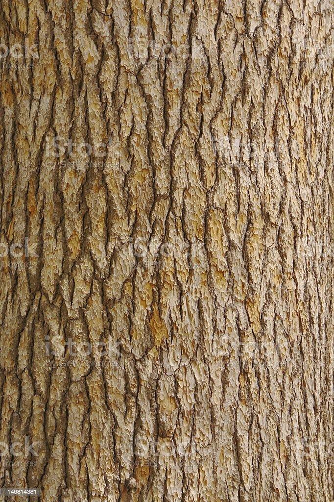 Pine tree bark texture royalty-free stock photo