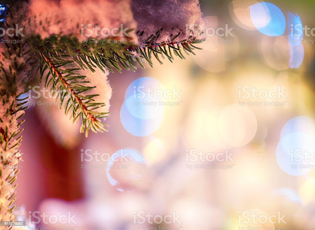 Pine Tree Branche stock photo
