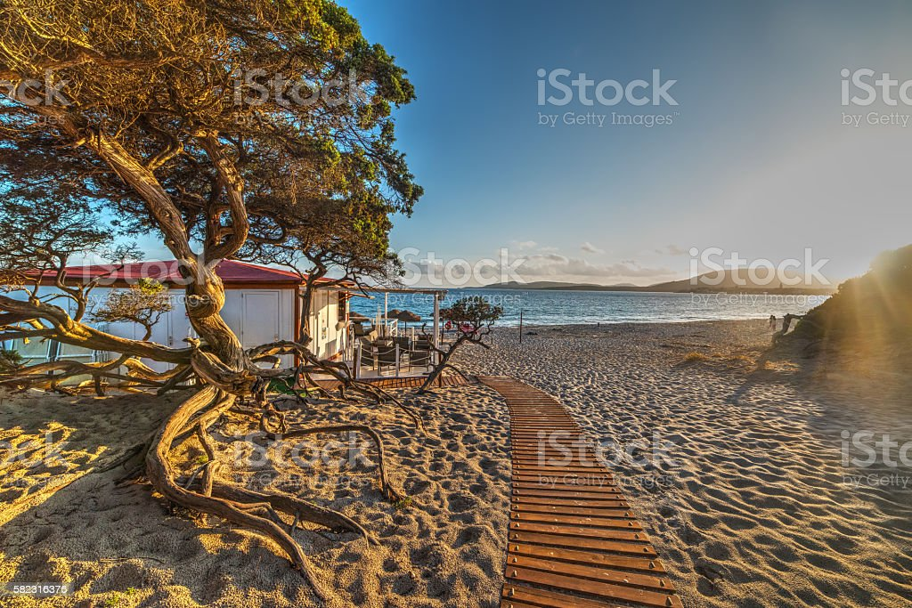 Pine tree by the sea at sunset stock photo