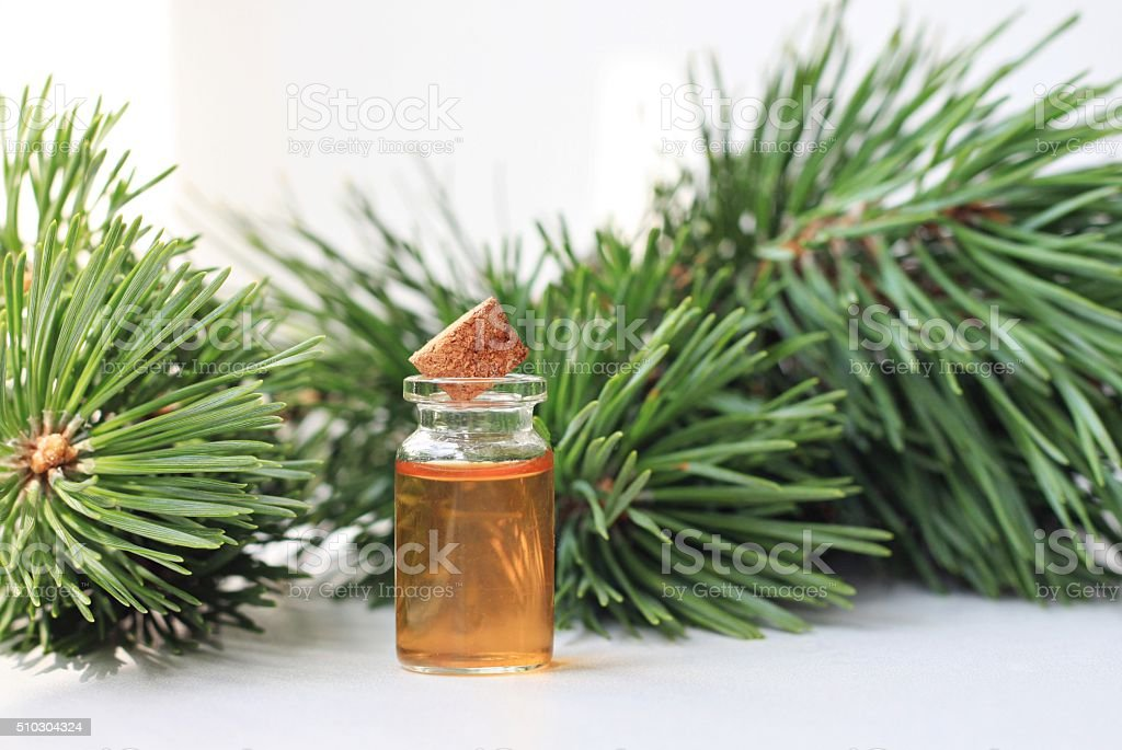 Pine Tree essential oil stock photo