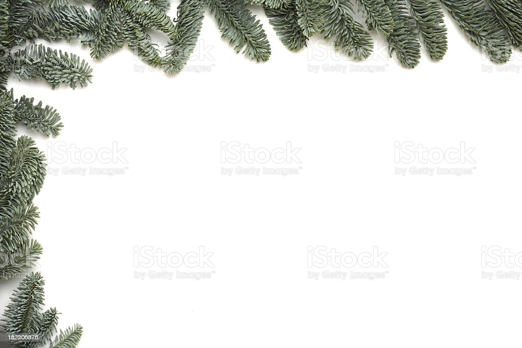 Pine tree frame - isolated on white royalty-free stock photo