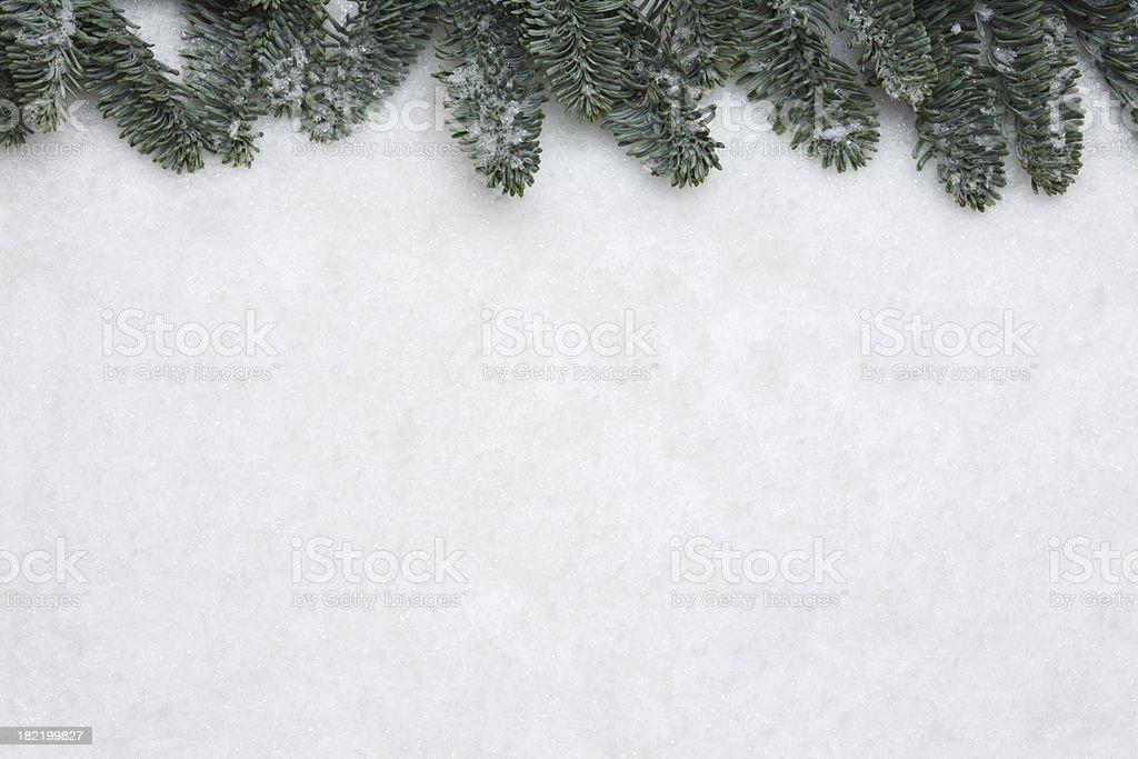 Pine tree frame on snow background stock photo