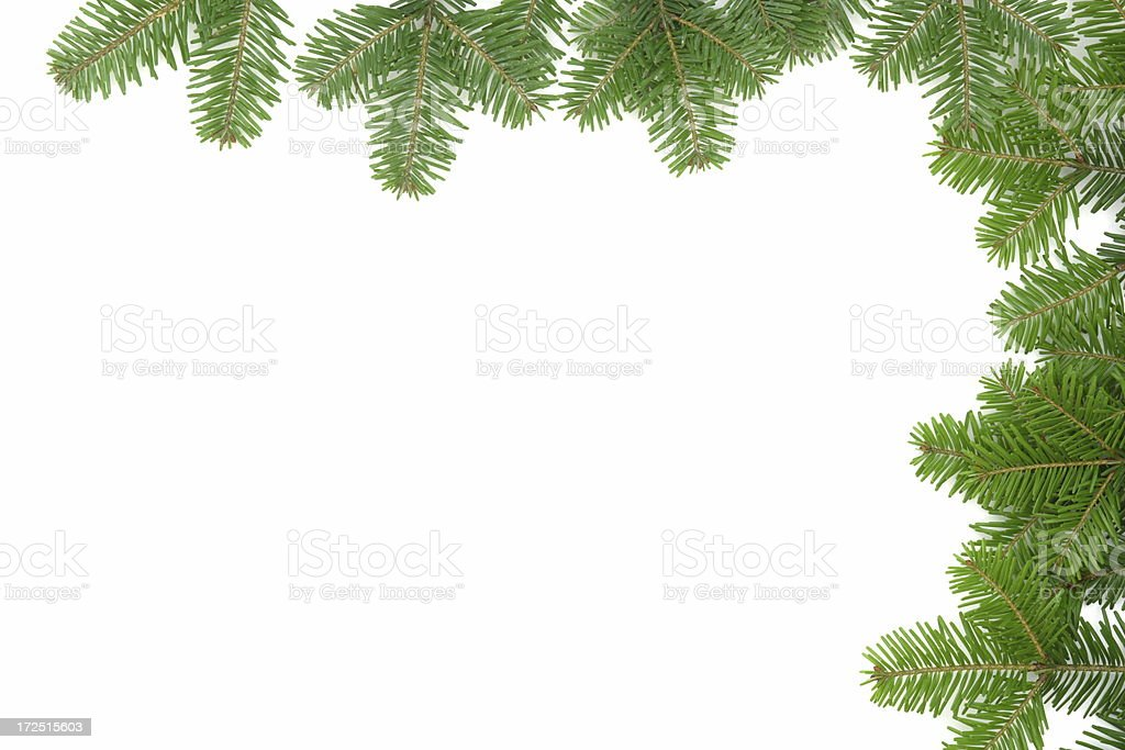 Pine Tree Frame royalty-free stock photo