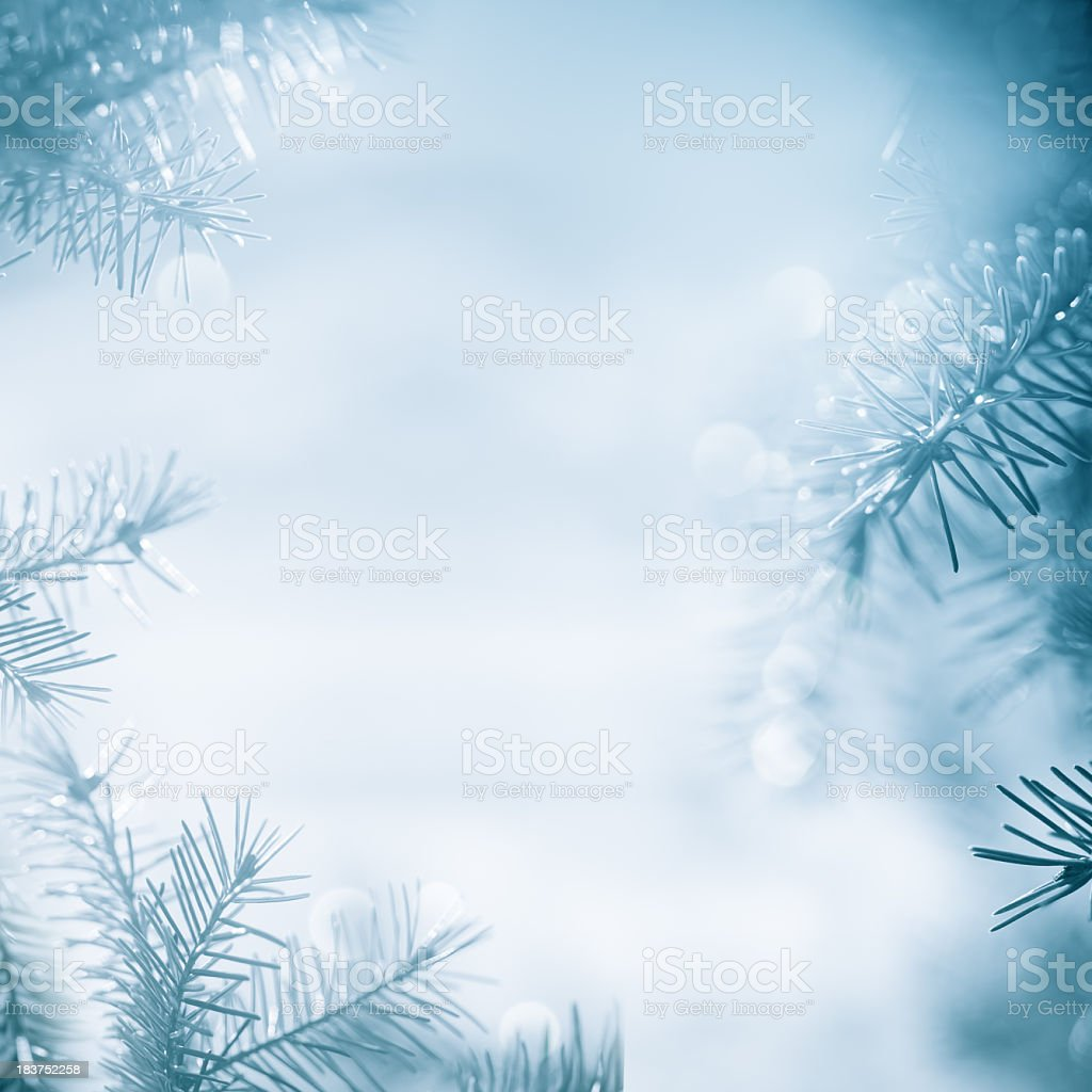 Pine tree  framework stock photo