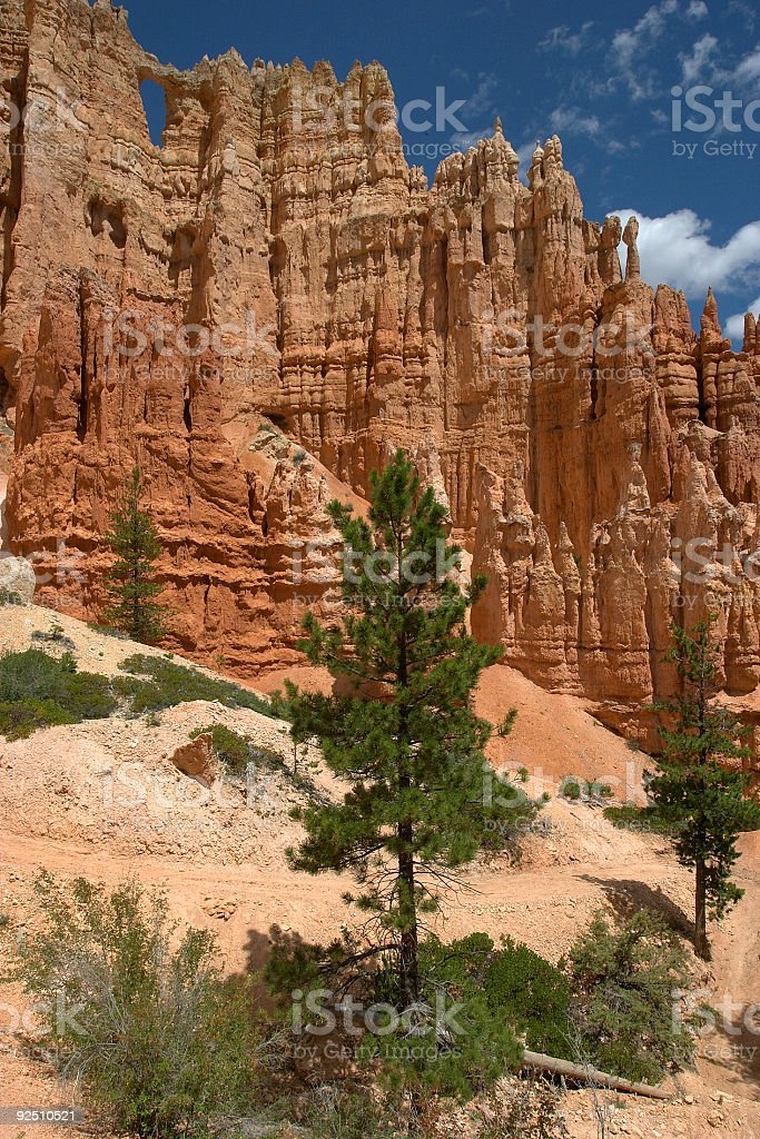 Pine Tree in  Bryce Canyon royalty-free stock photo