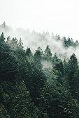 istock pine tree in the fog in oregon 862234532