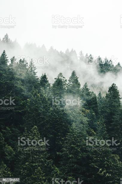 Pine tree in the fog in oregon picture id862234532?b=1&k=6&m=862234532&s=612x612&h=crmuslcxm7bltmi8fvrjsfogsi o4f c3ao 5yc bji=