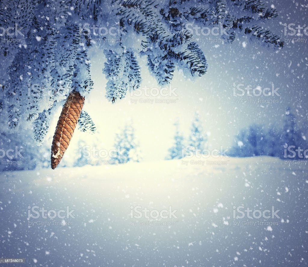 Pine Tree In Winter royalty-free stock photo
