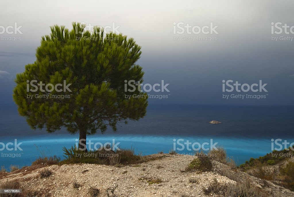Pine tree on the seashore royalty-free stock photo