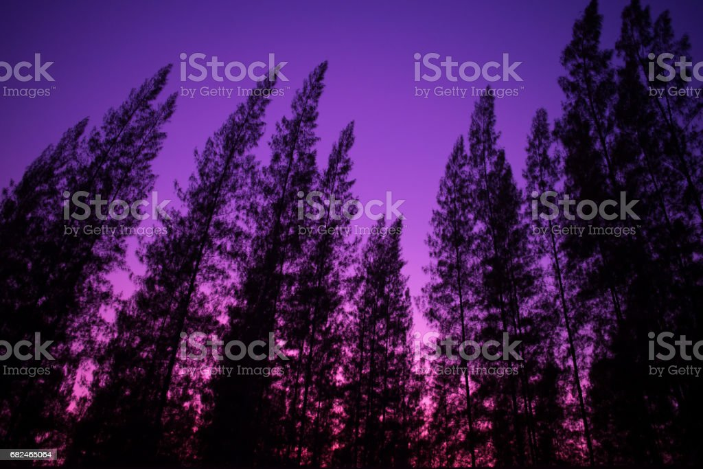 Pine Tree Silhouette royalty-free stock photo