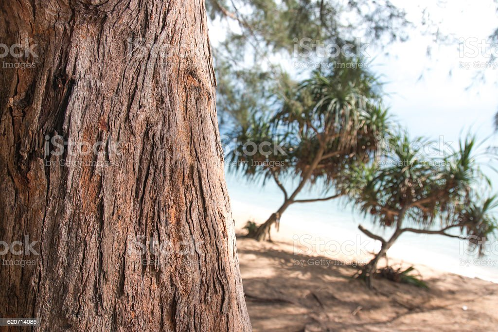 Pine tree trunk on beach with copy space selective focus stock photo