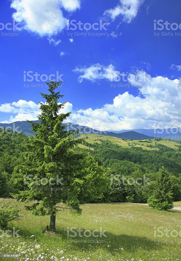 pine tree with panorama royalty-free stock photo