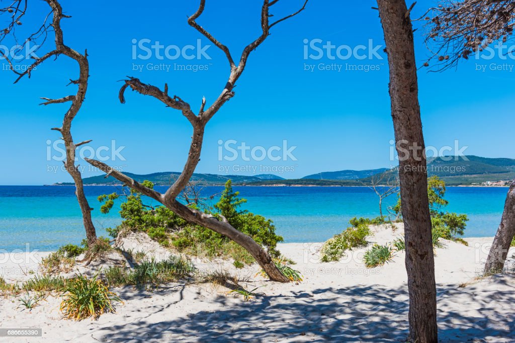 Pine trees and white sand in Maria Pia beach royalty-free stock photo