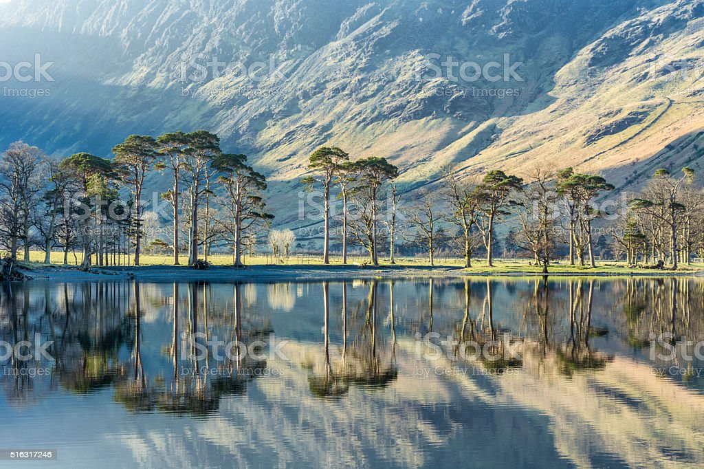 Pine Tree's Being Illuminated With Beautiful Light With Calm Reflections. stock photo