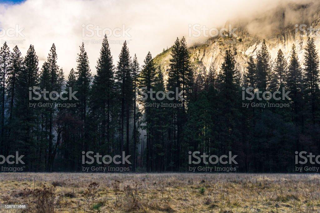 Pine Trees in Yosemite in Winter stock photo